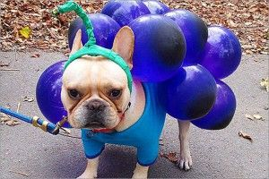Dog halloween costumes are bigger than ever want to join the fun dog halloween costumes are bigger than ever want to join the fun but can solutioingenieria Gallery