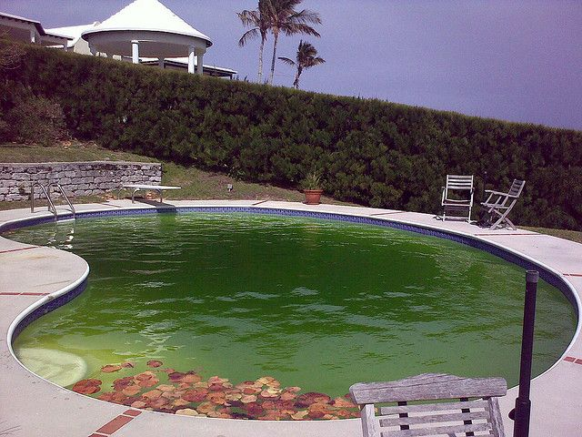 my swimming pool is green how to clean get rid of algae pool shock swimming pools and pool. Black Bedroom Furniture Sets. Home Design Ideas