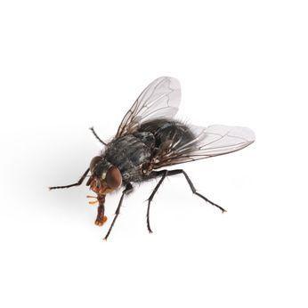 comment se d barrasser des mouches avec des r pulsifs. Black Bedroom Furniture Sets. Home Design Ideas