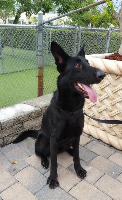 Adopt Cait On Petfinder Dog Friends Dog Adoption German