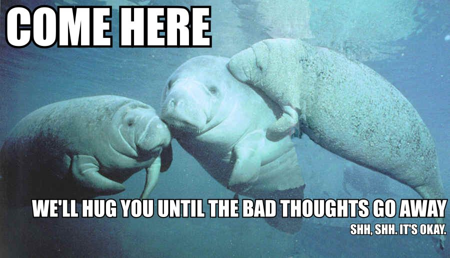 Funny Manatee Meme : Nothing like supportive manatees are the