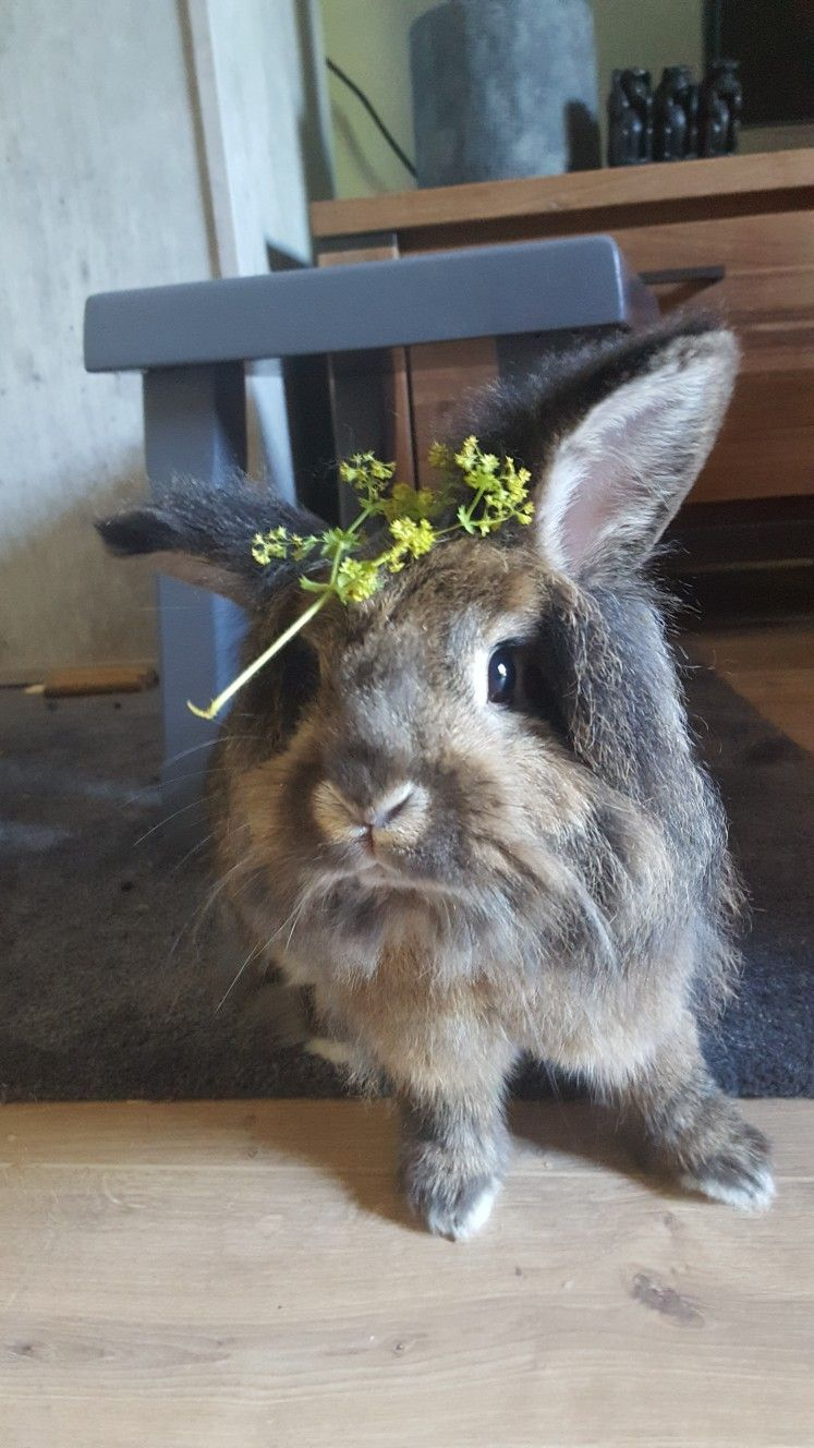 FLOWERS (With images) Cute bunny, Animals, Bunny