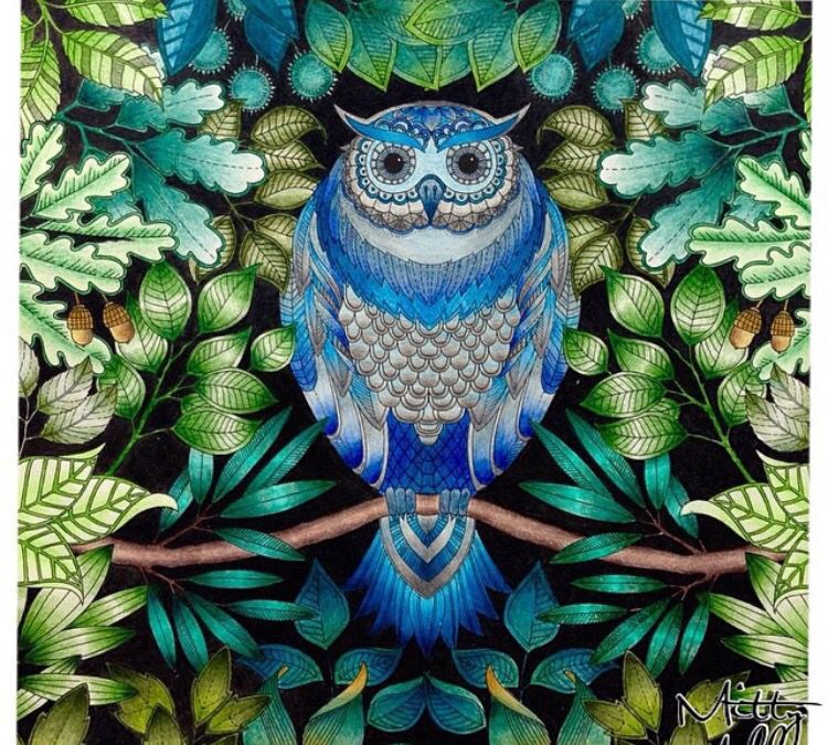 Owl Secret Garden Coruja Jardim Secreto Johanna Basford Secret Garden Coloring Book Enchanted Forest Coloring Enchanted Forest Coloring Book
