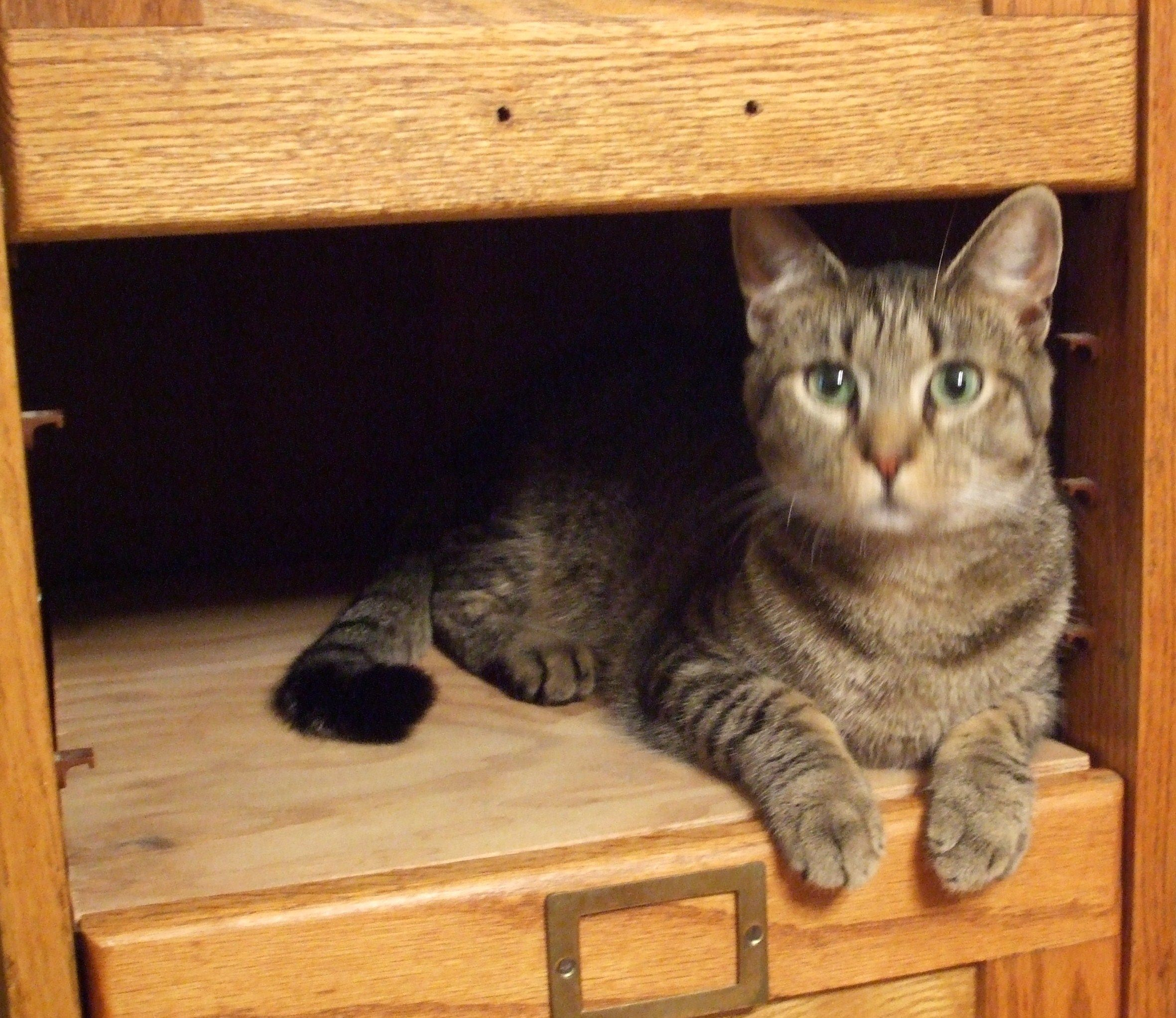 Cats Love Cuddly Nooks And Tiny Hiding Places Cats Cuddly Cat Love