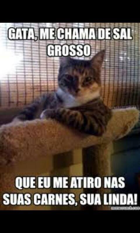 Diario De Um Gaucho Grosso Cantada A Moda Gaucho Grosso Memes