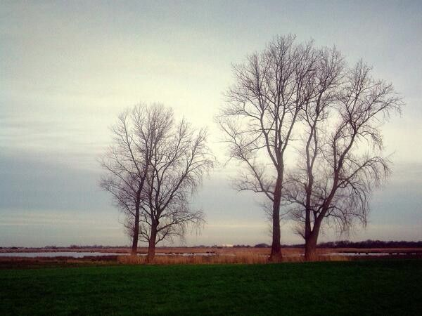 Bomen in vlak landschap