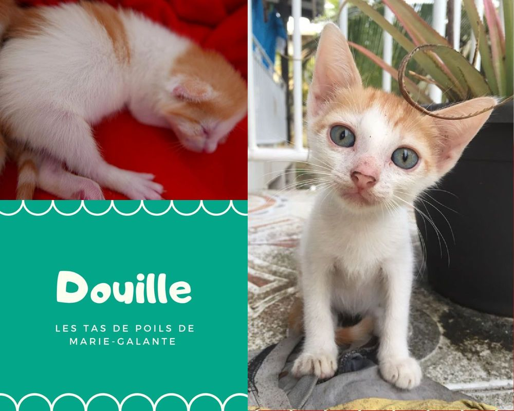 Epingle Sur Chat A Adopter