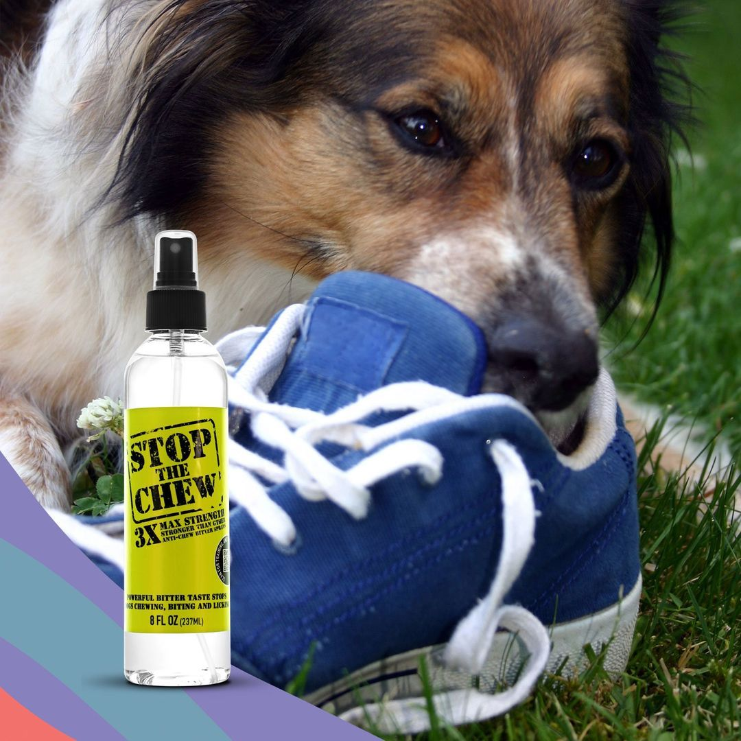 Charlie & Max Pet Odor Removal Products. The Ultimate Pet Odor And Stain Eliminator! #pet #petodor #odorremoval #petodorremoval