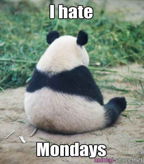 Funny pictures of pandas google search pandas pinterest funny pictures of pandas google search voltagebd Image collections