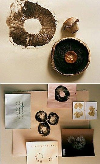 mushroom stamps