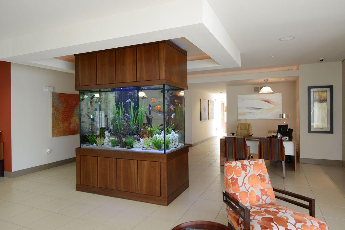 Freshwater aquarium fish dallas - Dallas Apartment Complex Lobby Custom Freshwater Aquarium By Fish Gallery