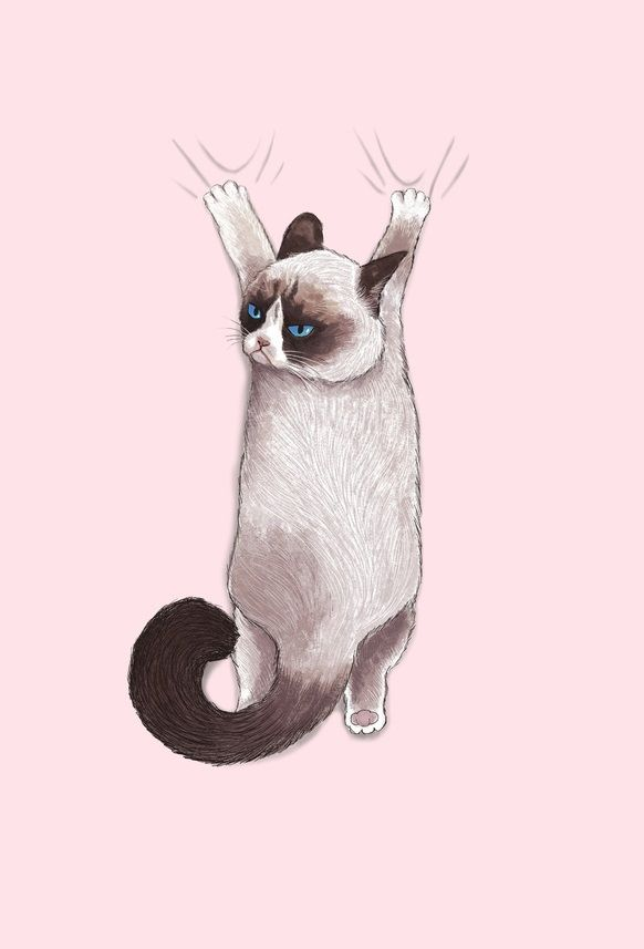 1000drawings Photo Grumpy Cat Art Cat Wallpaper Cats Illustration