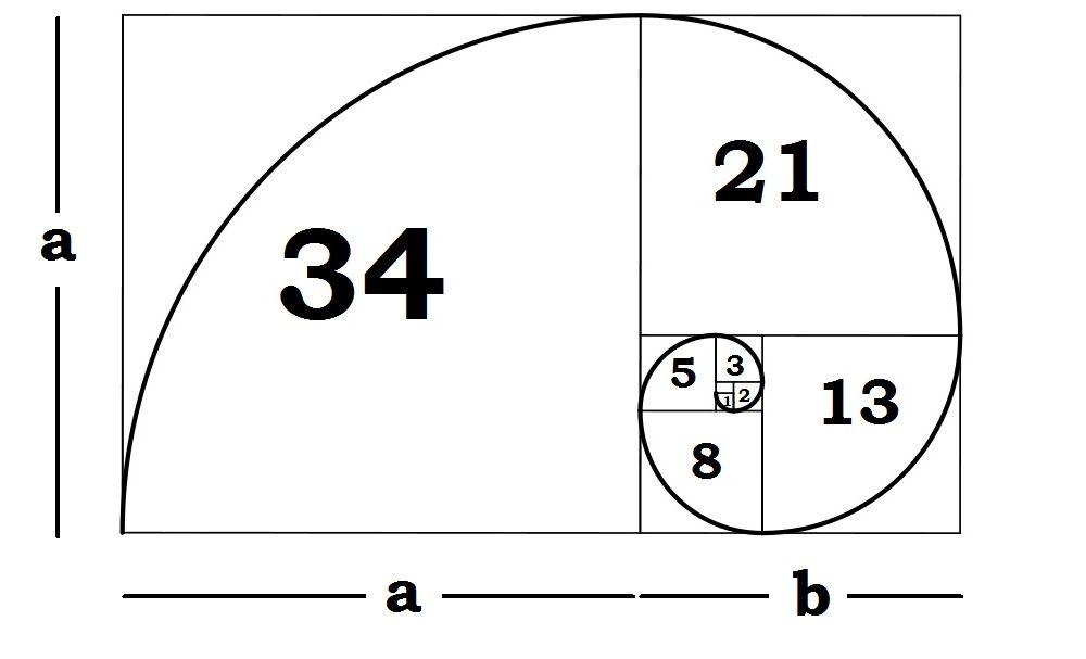 """Resultat d'imatges per a """"successió de fibonacci"""""""