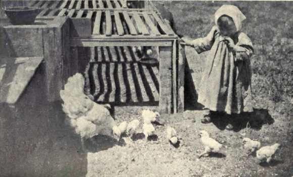 Chickens...love them.