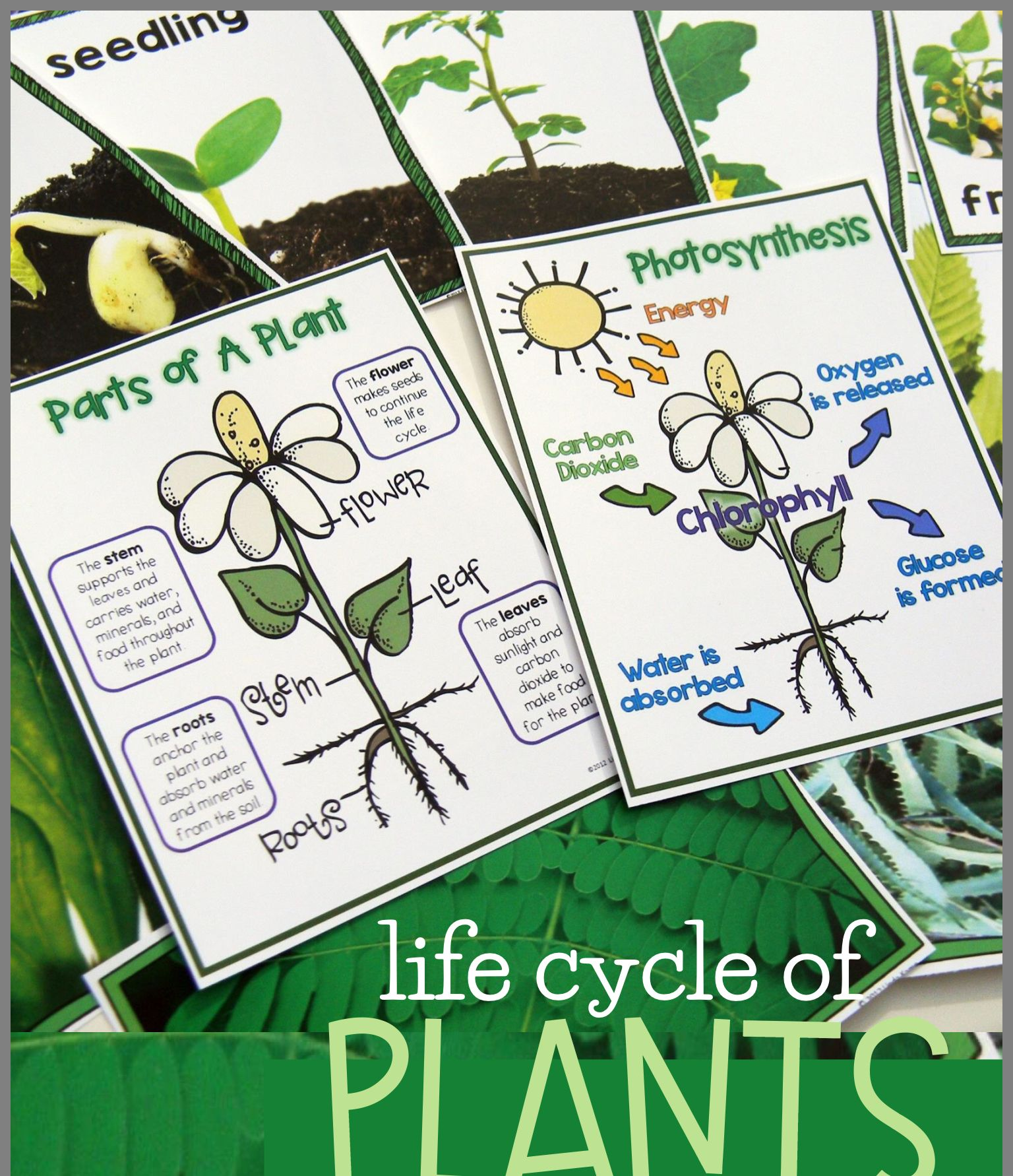 Pin By Heather H On Lesson Plan Templates