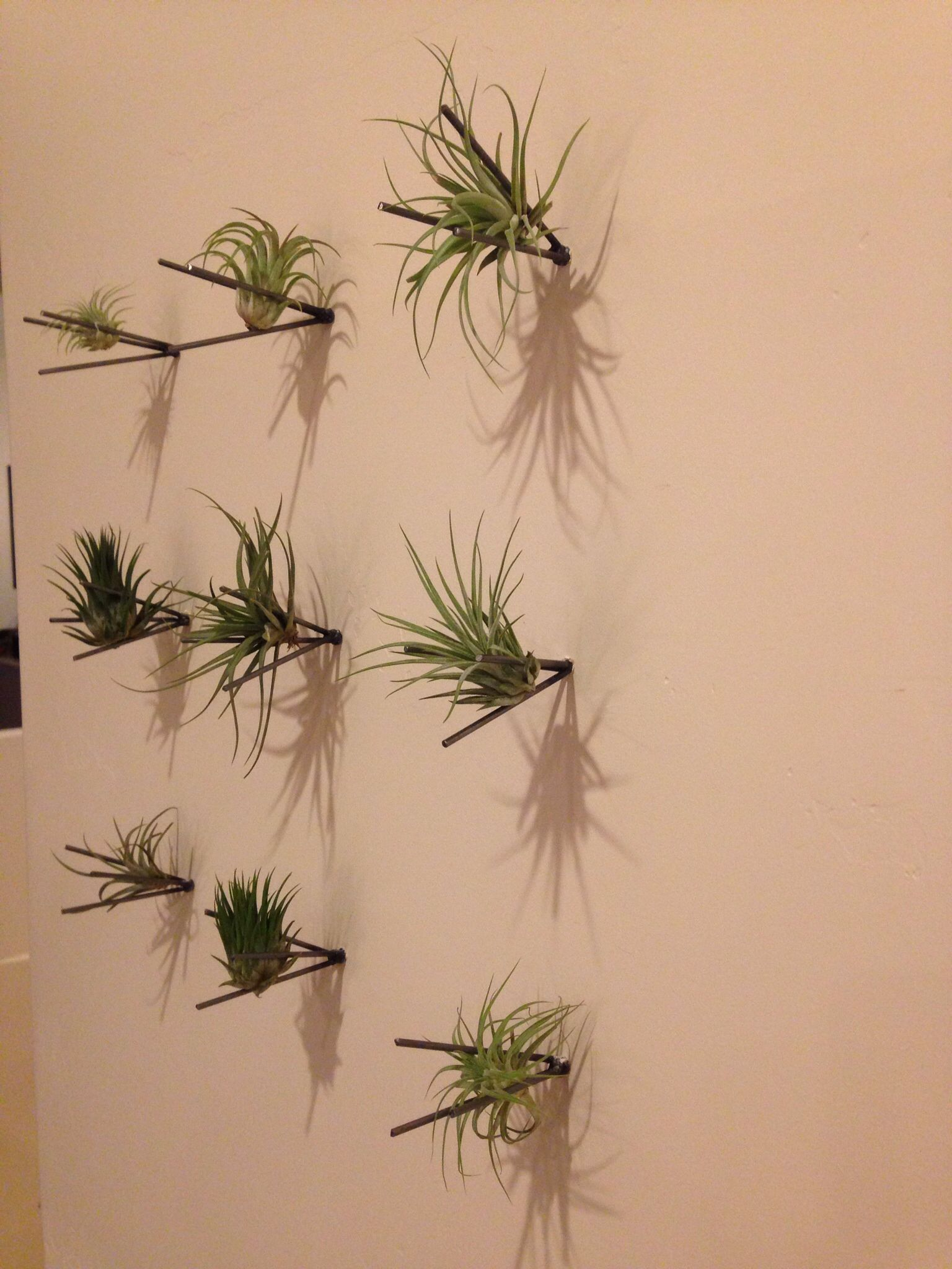 Air Plant Wall Mount Display Ideas Plants Project