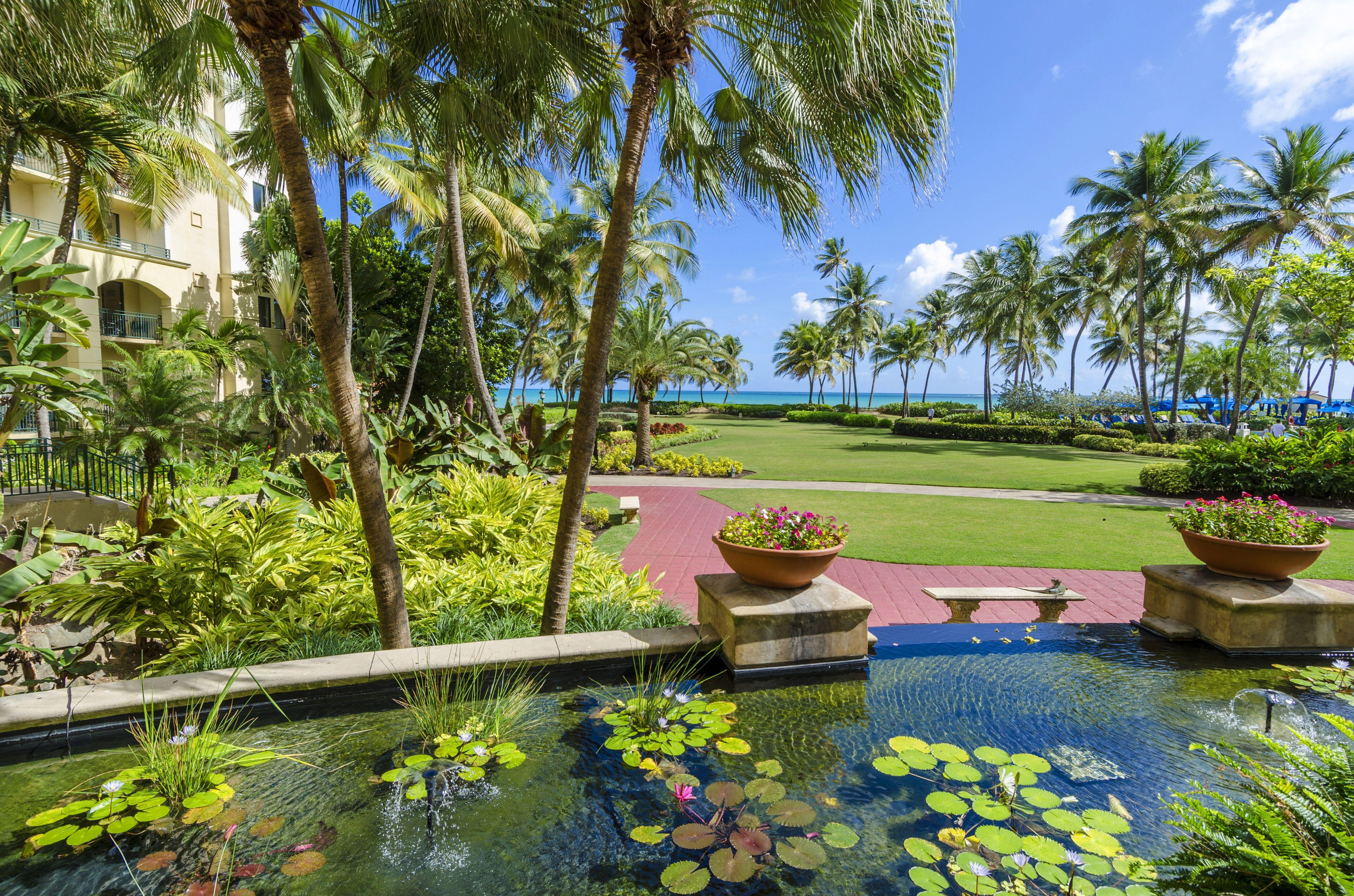 50++ Puerto rico destination wedding all inclusive ideas in 2021