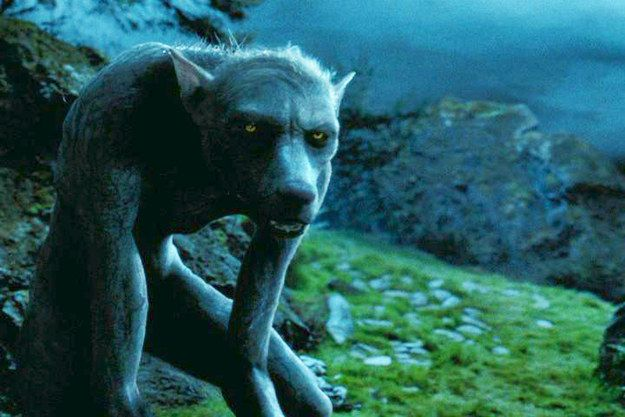 Which Harry Potter Creature Are You Harry Potter Creatures Magical Creatures Harry Potter Wiki
