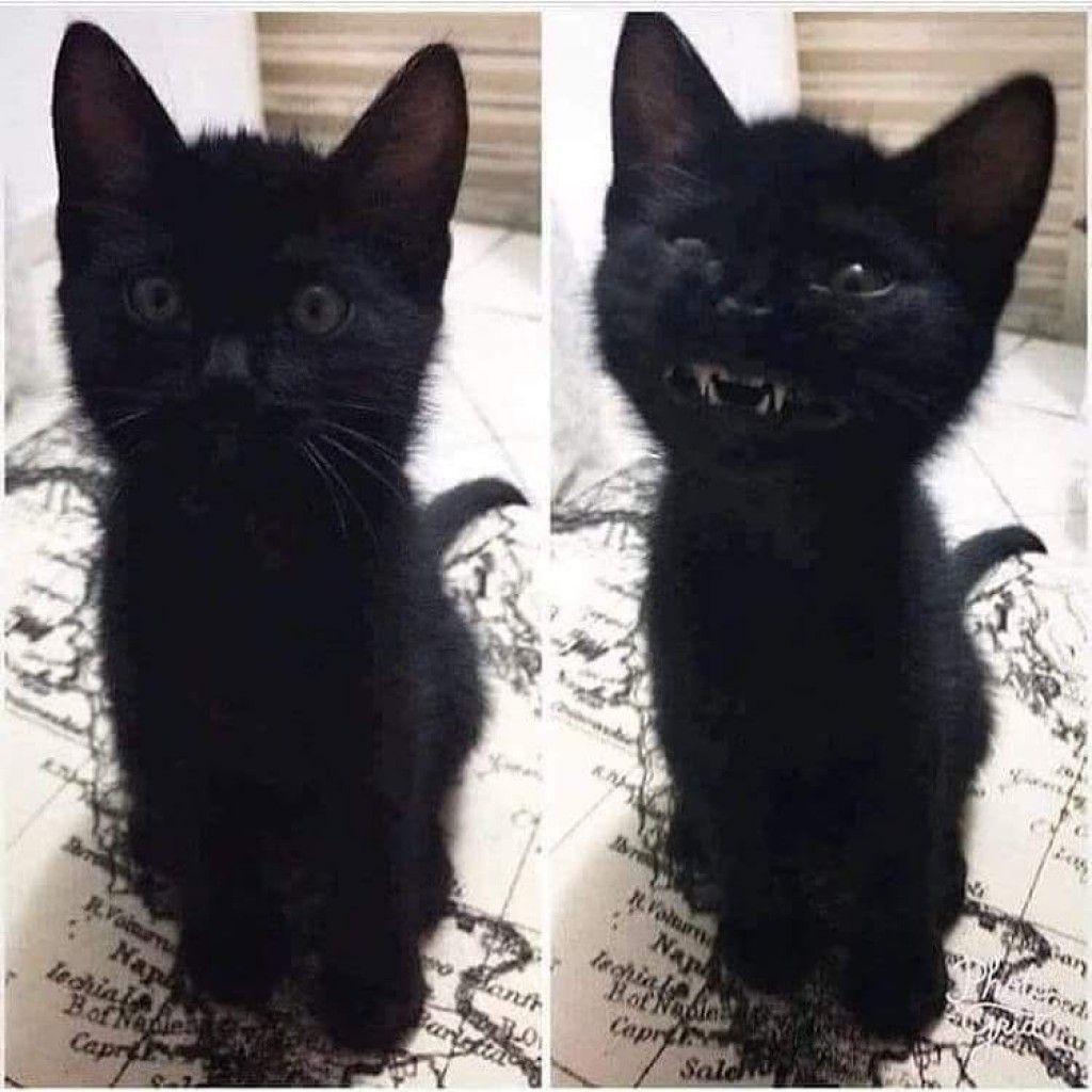 (12) TOPI_Wolf Minds Pretty cats, Cat post, Cute animals