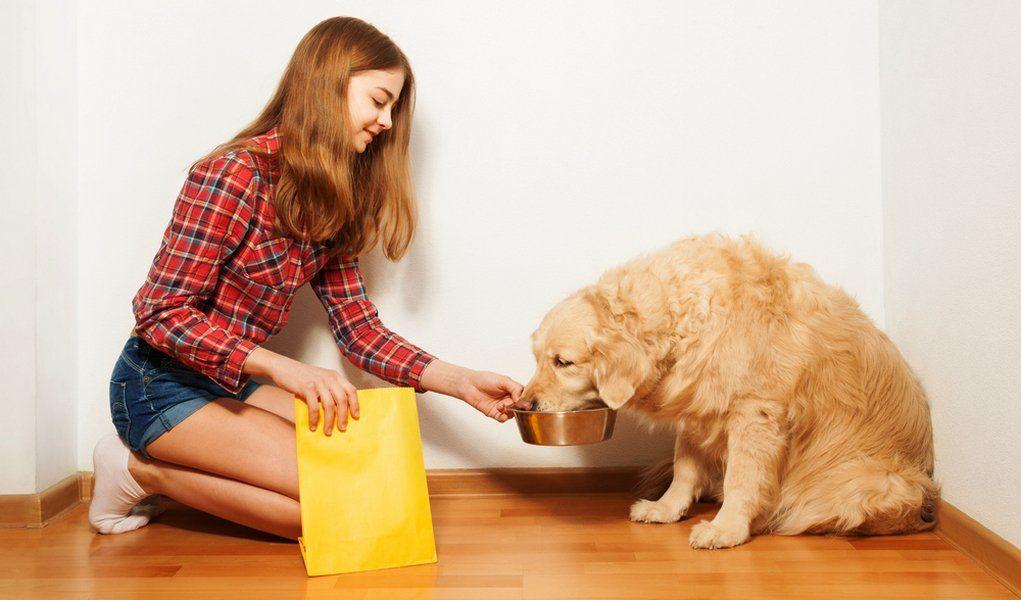 how much to feed golden retriever puppy reddit