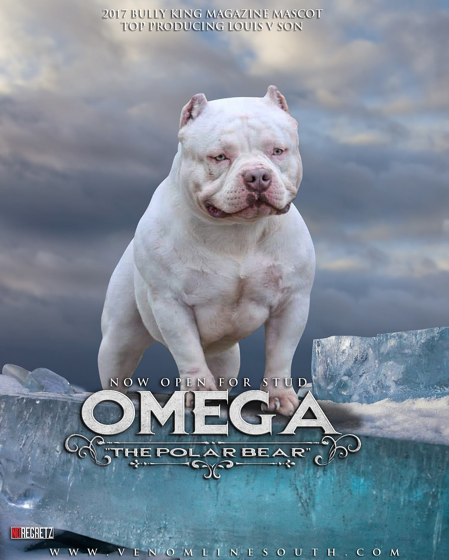 American Pocket Bully Breeding Phenotype Genotype Bully