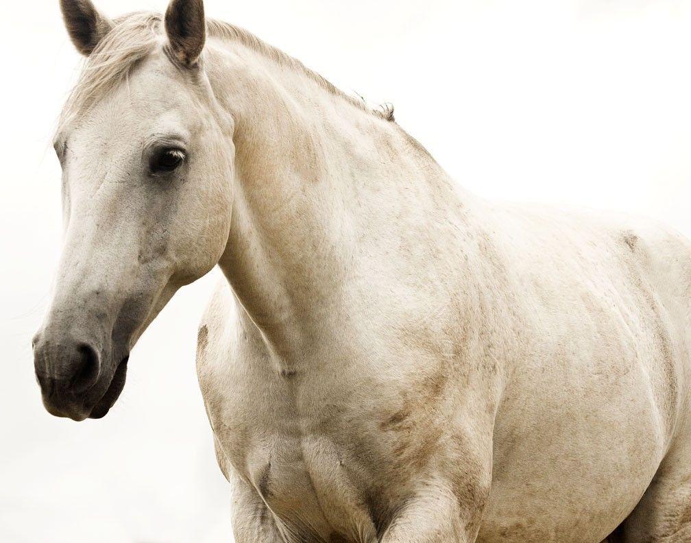 Beautiful white horse paintings - photo#14