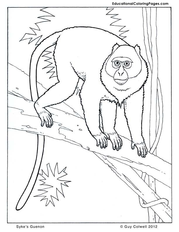 Guenon And Monkey Squirrel Coloring Pages
