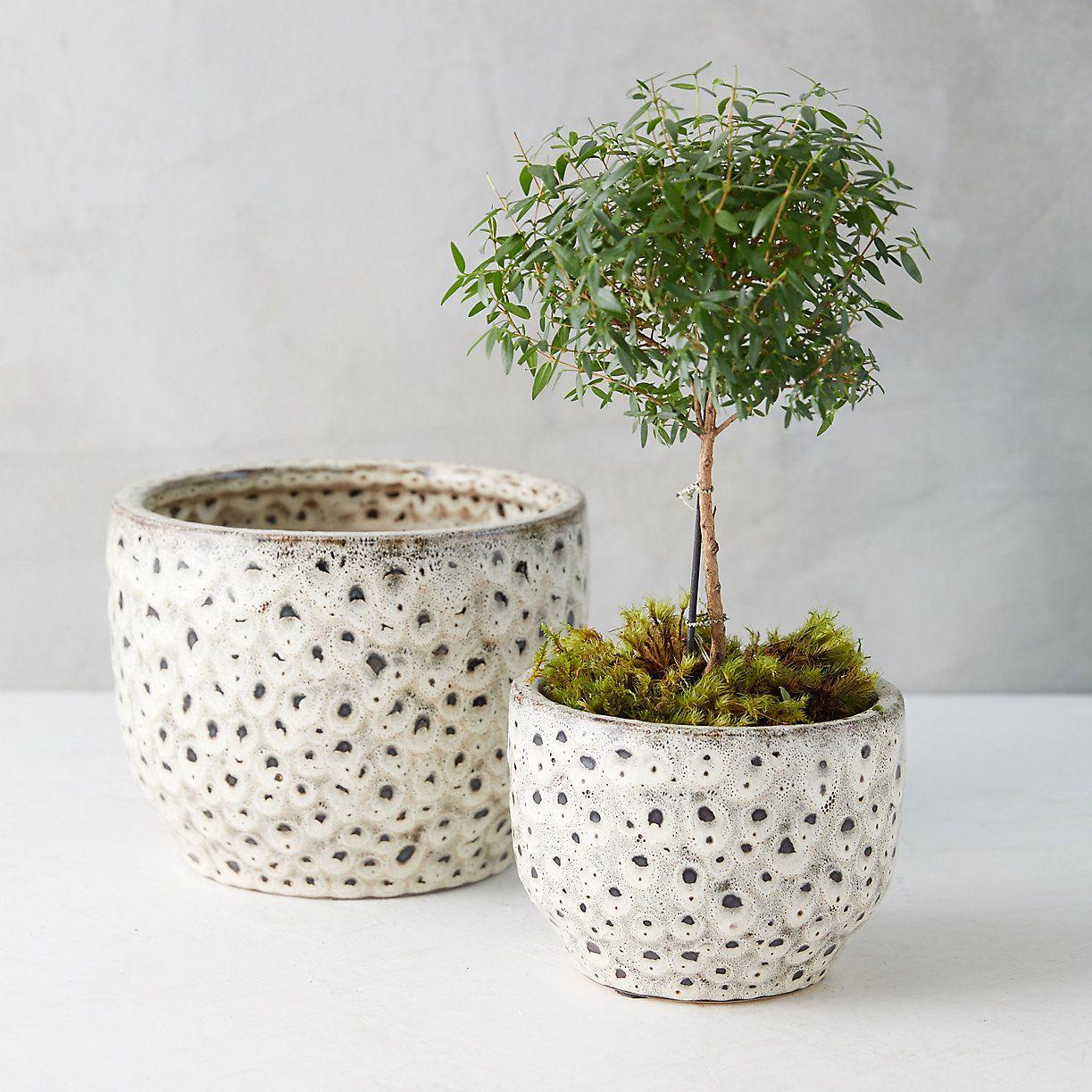 Spotted Earthenware Pot Terrain Indoor Outdoor Planter Pot