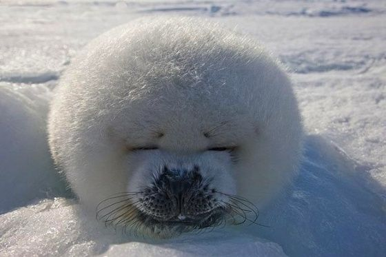 Seal Fro.