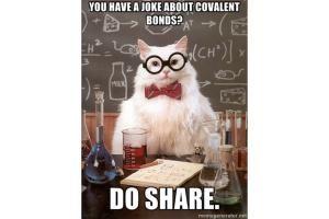 The Best of the Chemistry Cat Meme: Chemistry Cat - Covalent Bond                                                                                                                                                     More