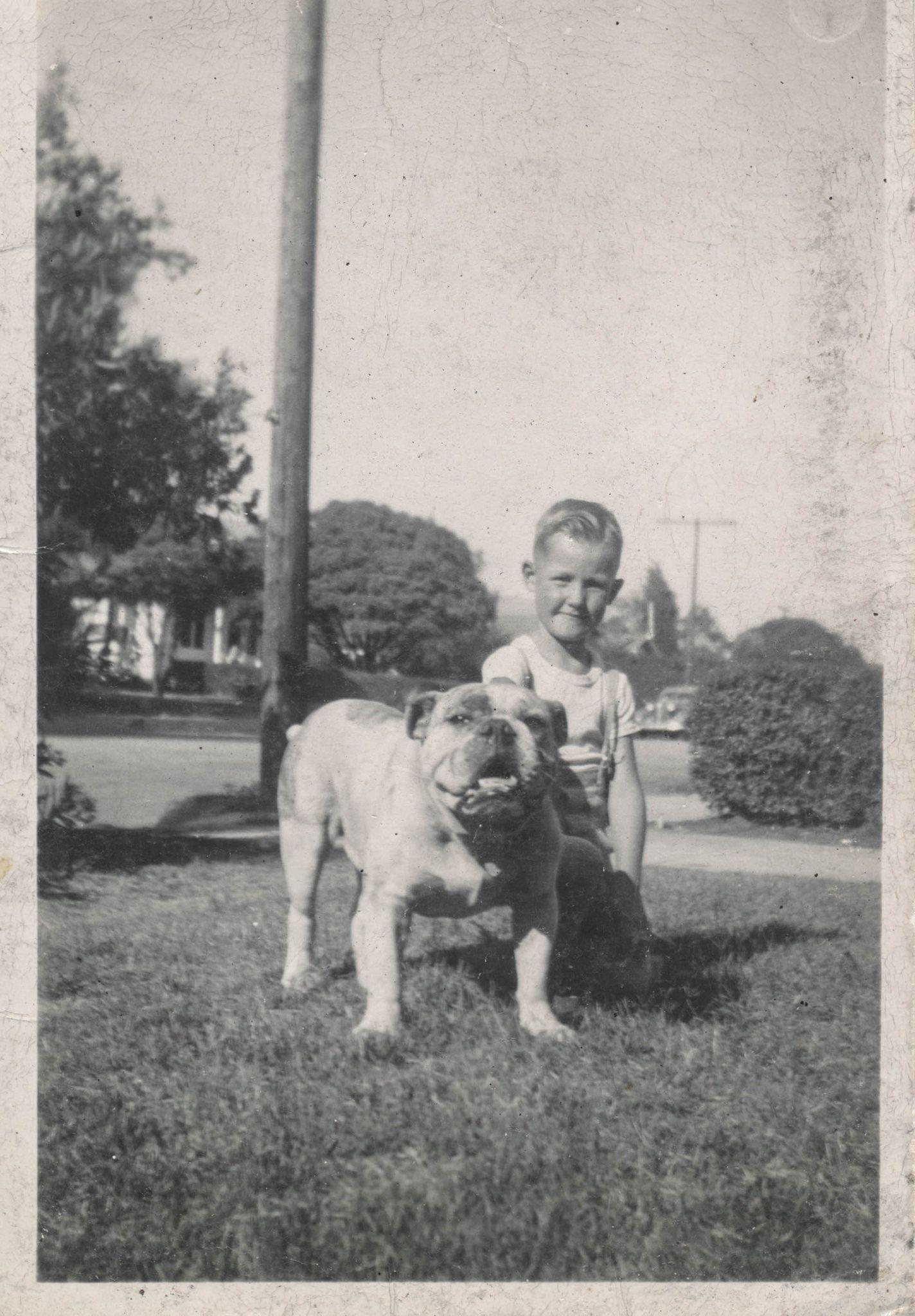 Bulldog-colección C.H.