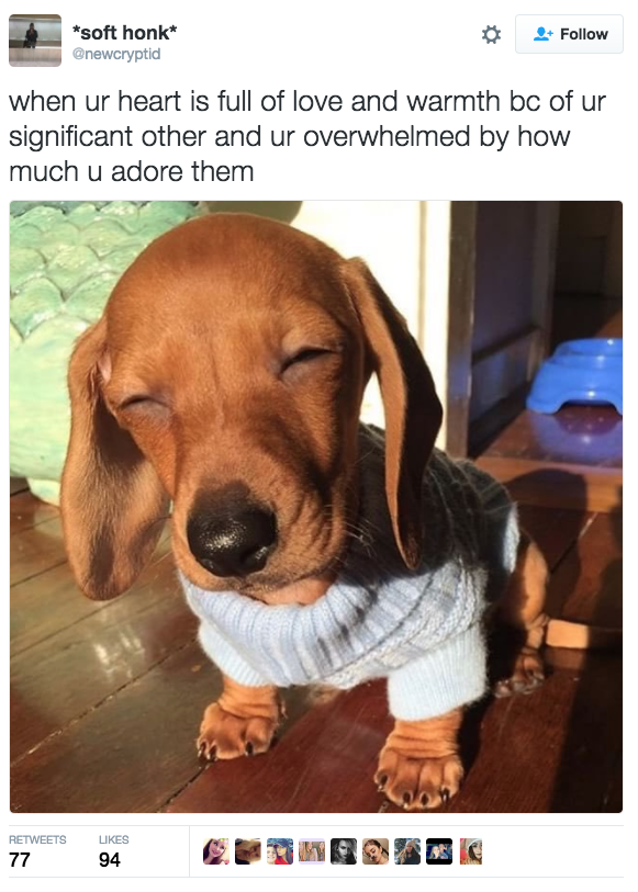 21 Pure Wholesome Tweets That Will Help You Through The Dark Winter Funny Girlfriend Memes Funny Animal Pictures Funny Animals