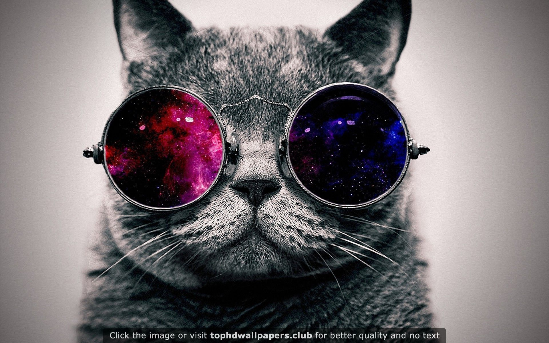 Sunglasses 4k Wallpapers For Your Desktop Or Mobile Screen Free And Easy To Download Glasses Wallpaper Cat Glasses Hipster Cat