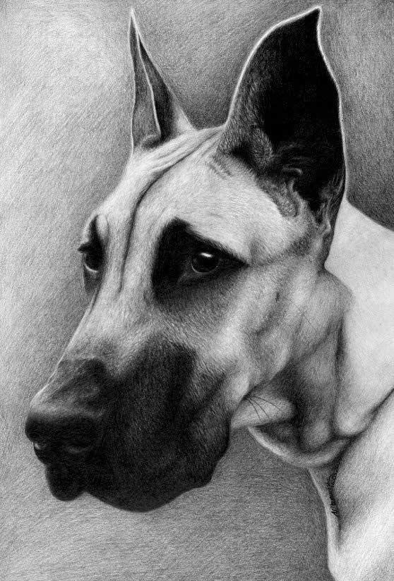 50 Profesionales De Fotos Dibujos De Animales Realistas Dibujos