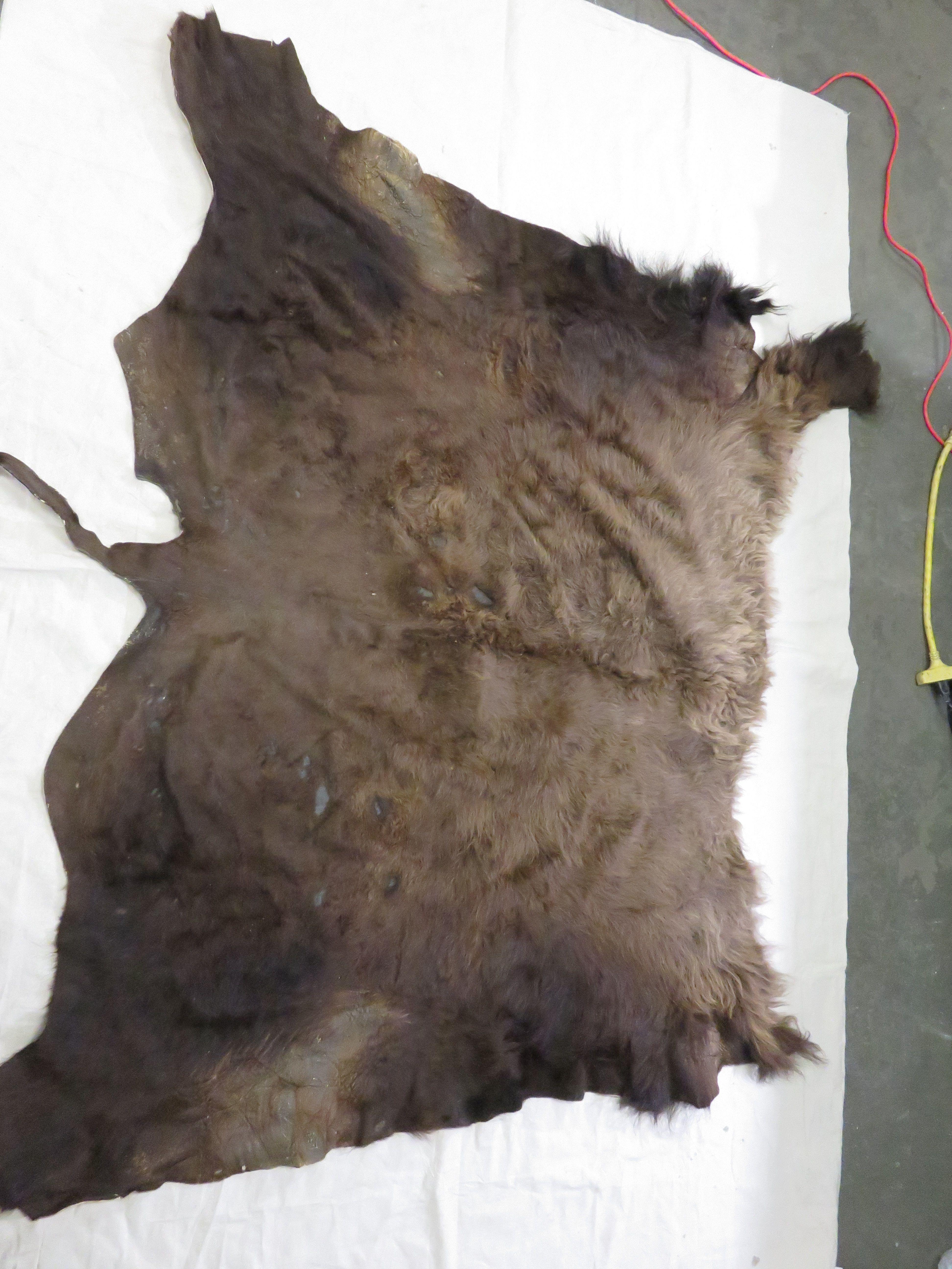 Buffalo hideskin tanned hide taxidermy tan skin