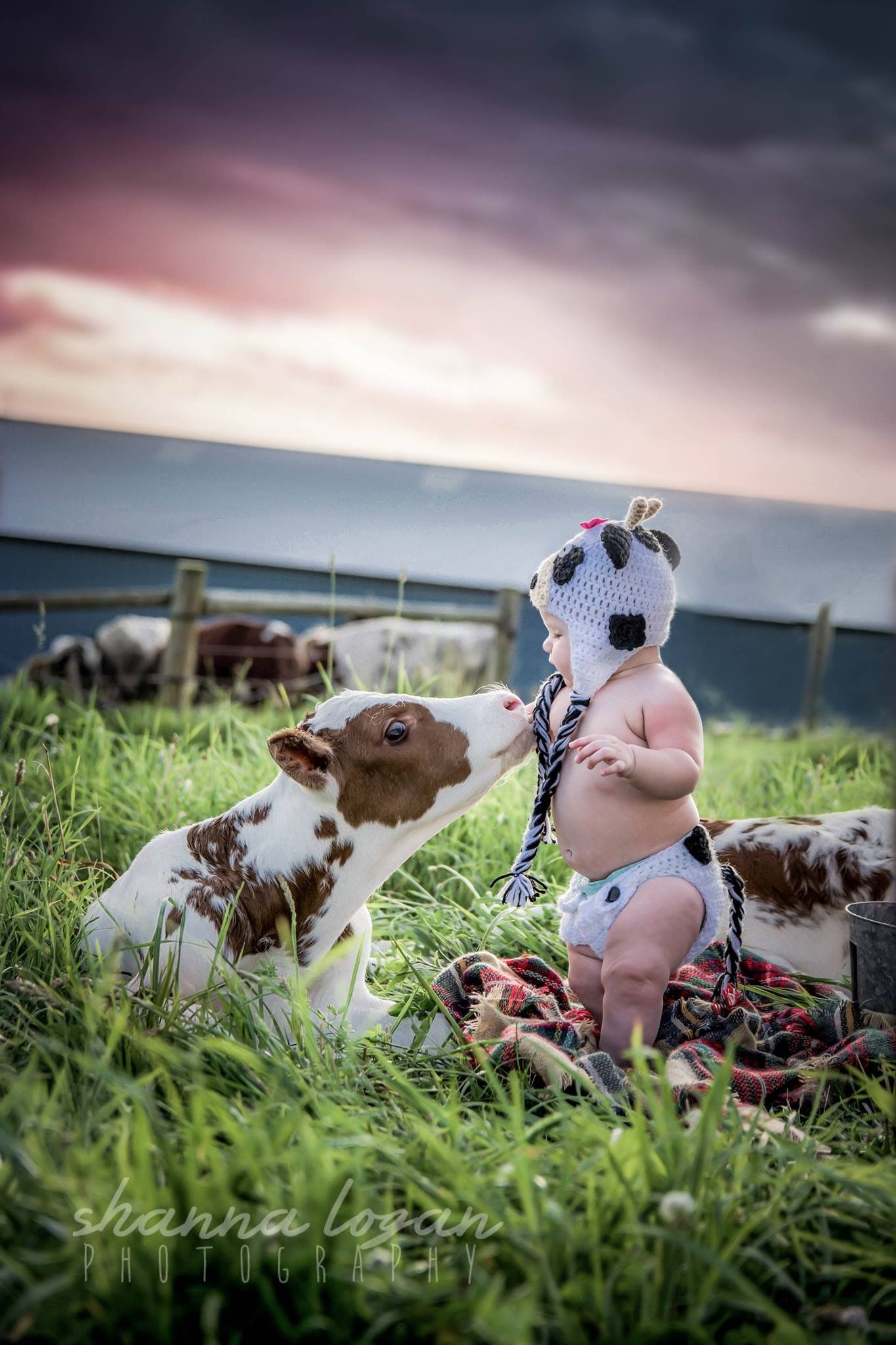 Pin by jessica hartley on photography baby baby cows