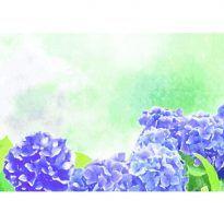 水彩画風の紫陽花 背景無料イラスト/梅雨