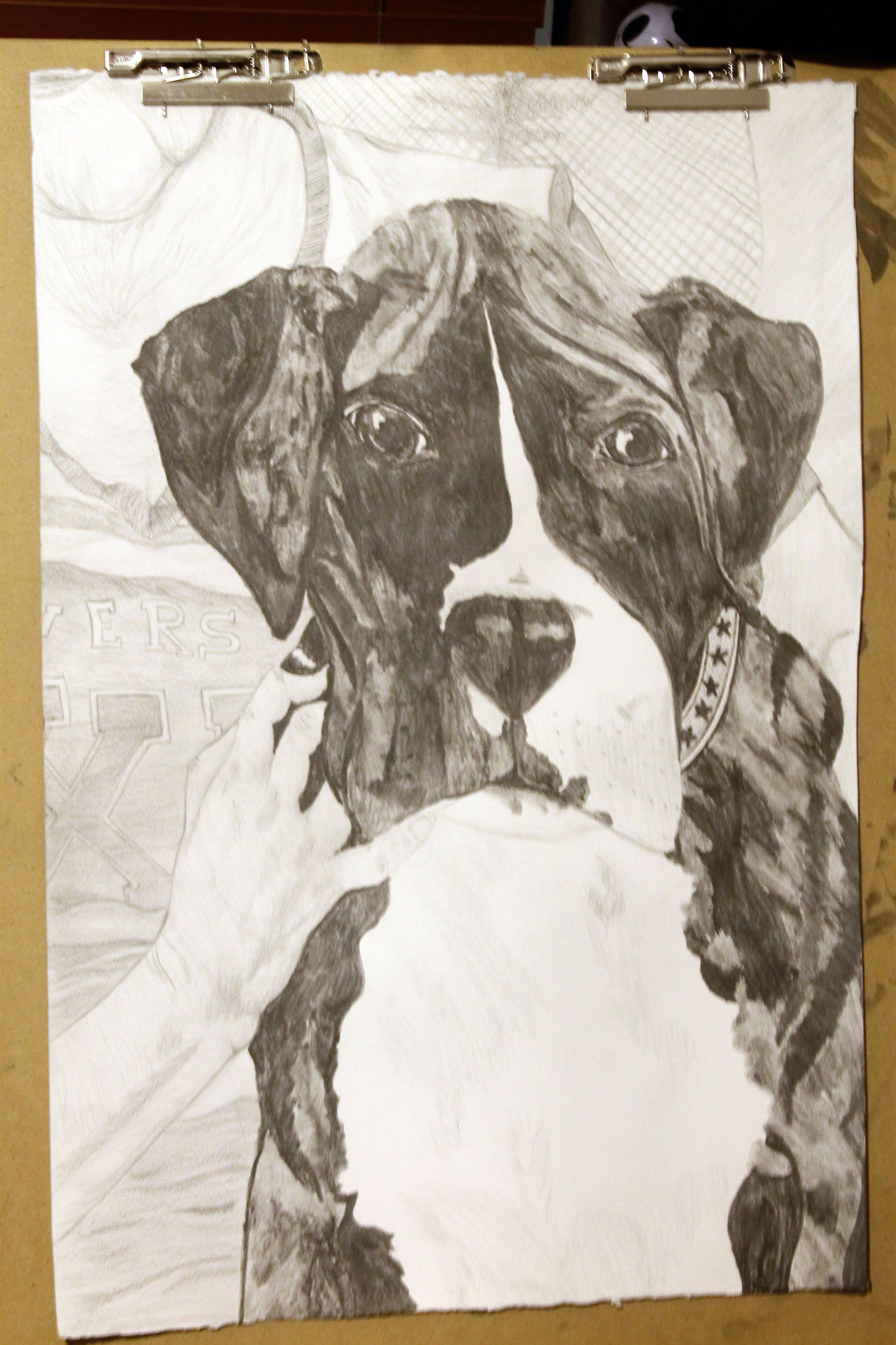 a drawing of a brindle boxer puppy named Bell Dog