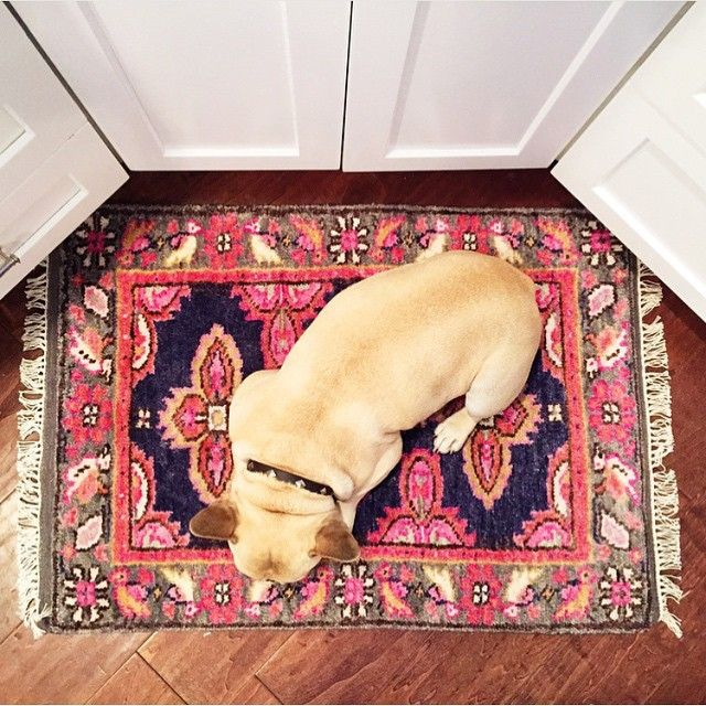 Caitlin Wilson Our Navy Kismet Rug Is Nap Approved Shareyourcwt Rugs On Carpet Caitlin Wilson Design House Flooring