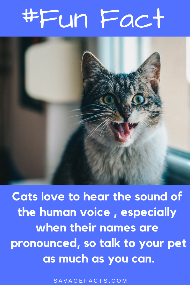 Amazing Facts About Cats That You Didn't Know Fun facts