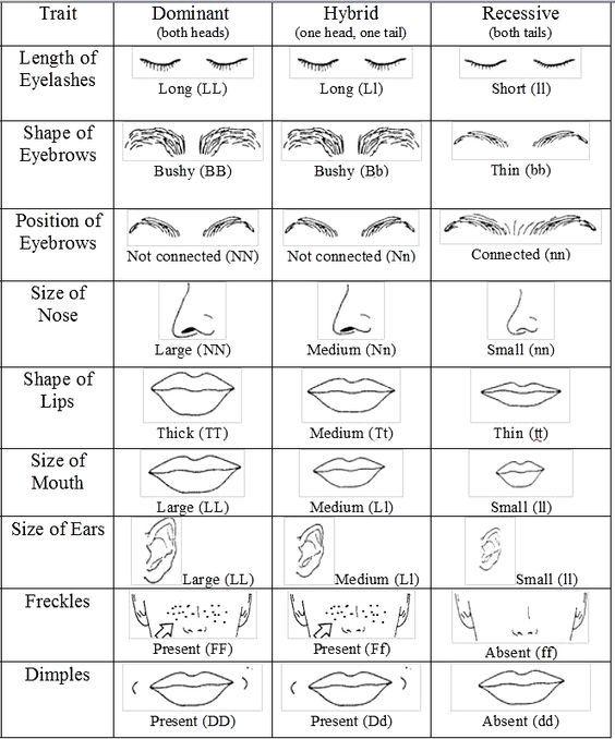Recessive Dominant Trait Activity Genetics Traits Biology Classroom Genetics Lesson Dominant and recessive traits worksheet