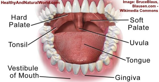 Swollen Uvula Causes Symptoms And Home Remedies Jenny Hills
