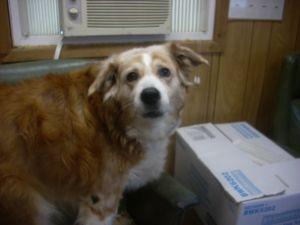 Adopt 4 Urgent Excellent Boy 6 N Male On No Kill Animal