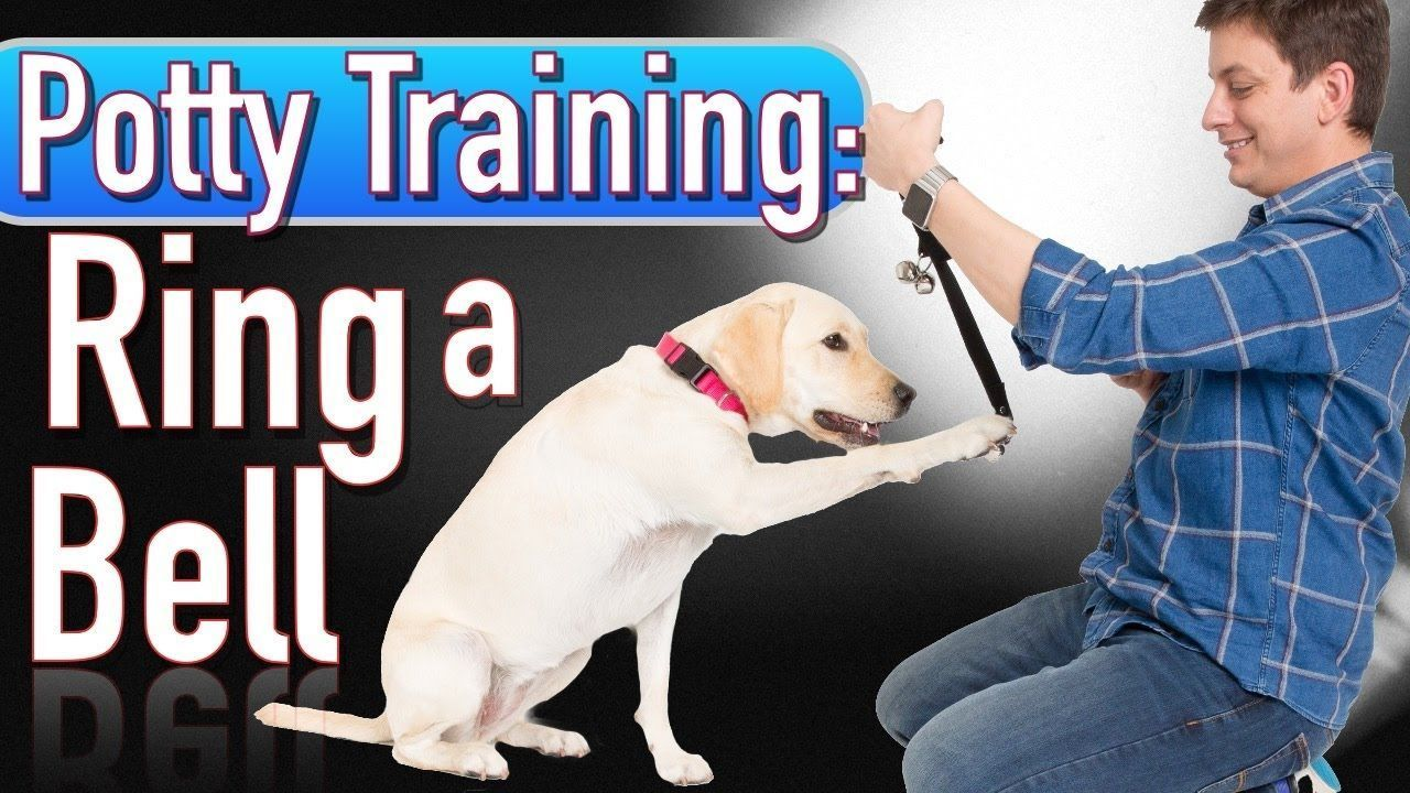 Potty Training How To Train Your Dog To Ring A Bell To Be Let