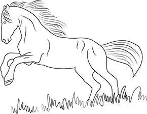 Ausmalbild Pferd Zum Kostenlosen Ausdrucken Und Ausmalen Ausmalbilder Malvorlagen Hund Hunde A Ausmalen Ausmalbilder Ausmalbilder Zum Ausdrucken