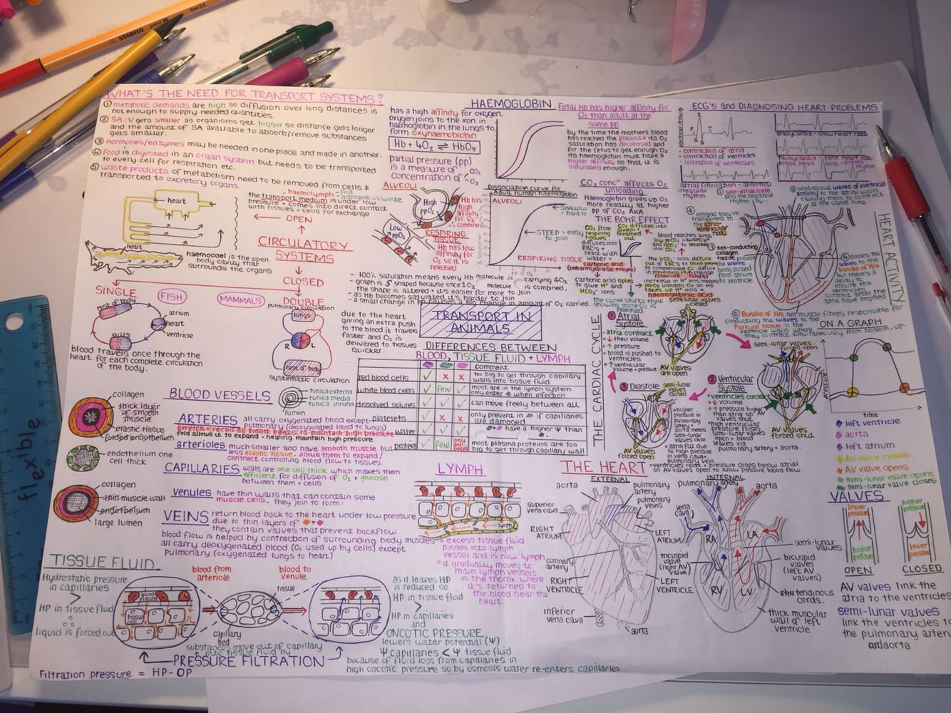 OCR A Level Biology: Transport in Animals Topic Mind Map | School