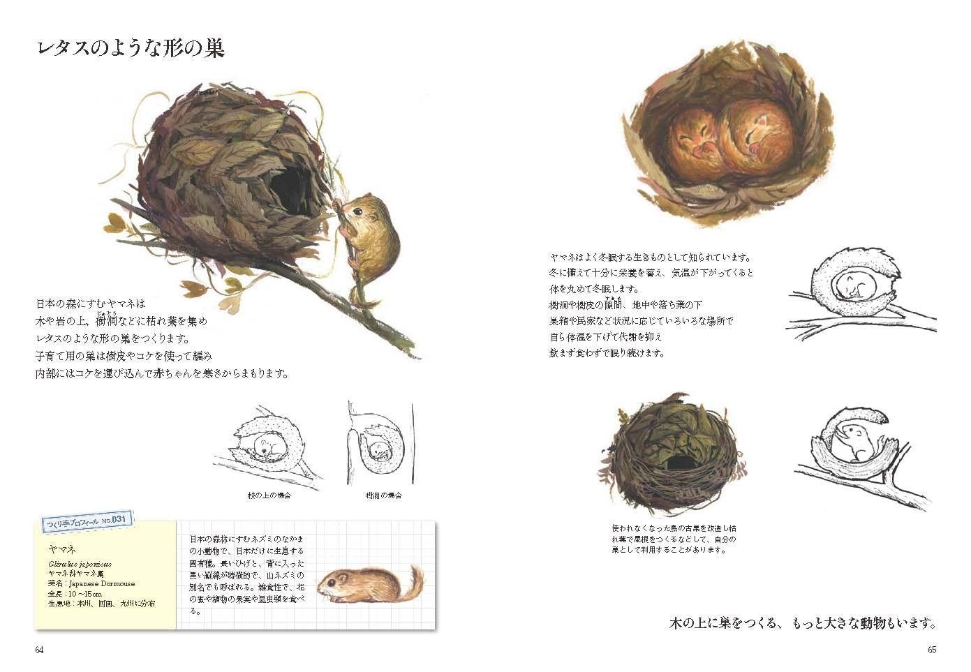 생물들의 건축 둥지 109 | 스즈키 마모루 | 책 | Amazon.co.jp