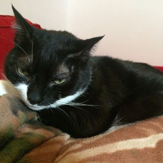 """Che modella la mia Tabatha!!  #animal #cat #catlover #catlovers #cats #catsofinstagram #catstagram #happy_pet #ilovemycat #ilovemypet #instacat…"""