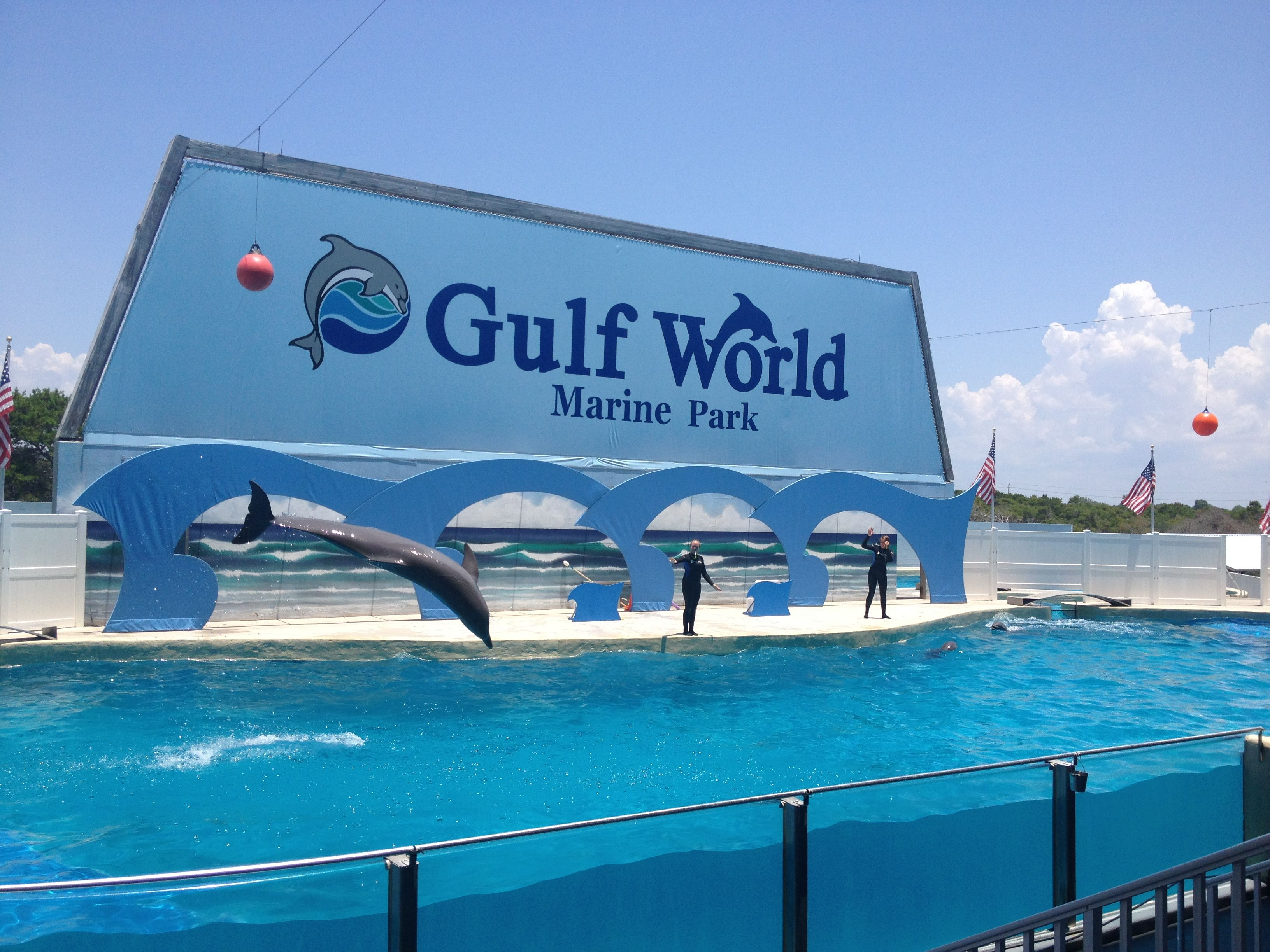 Gulf World Marine Park Panama City Beach Fl I Love The Ga Aquarium But This Is How You Do A Dolphin Show Not Some Indoor Dark Theatrical Where
