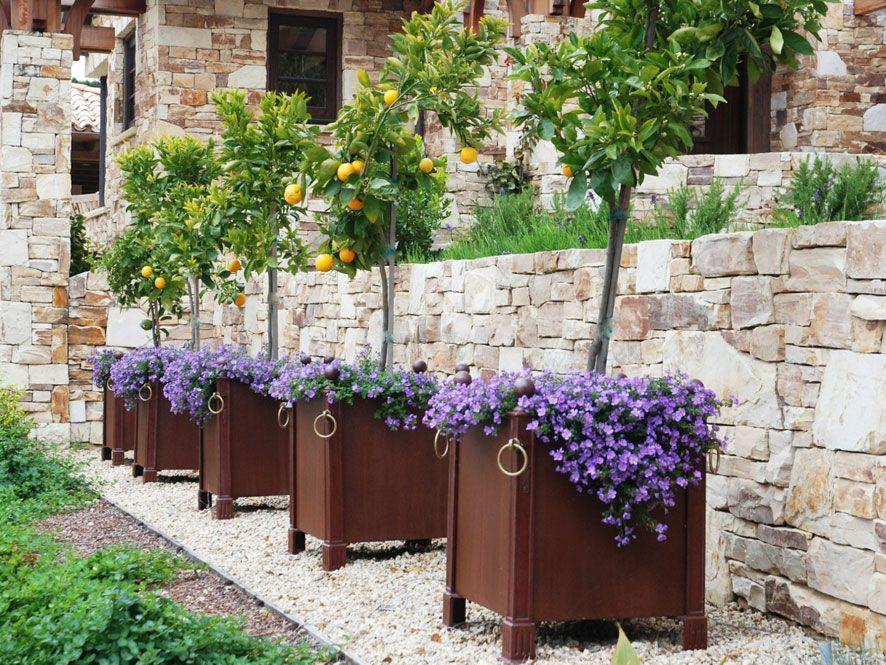 Row Of Citrus Tree Planters